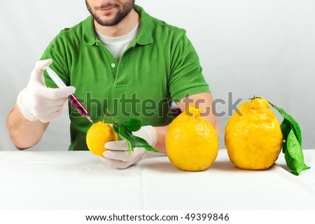 A man giving a shot to a lemon to make it grow as big as a melon. The concept of food genetics and transgenic food.