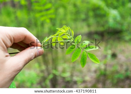 A man hands holding a green young plant, safe the world concept, ecology system
