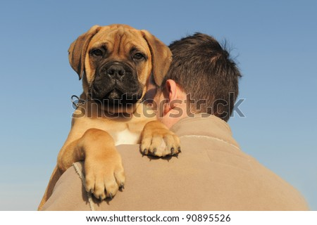 a man holding on his shoulder his puppy Bull Mastiff - stock photo