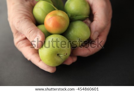 A man holds several fresh plums on a black background. - stock photo
