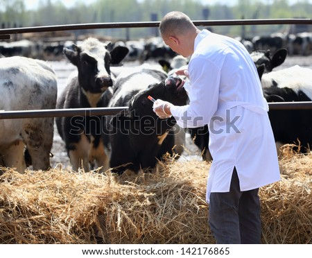 a man in a white coat takes analyzes the cows on the farm - stock photo