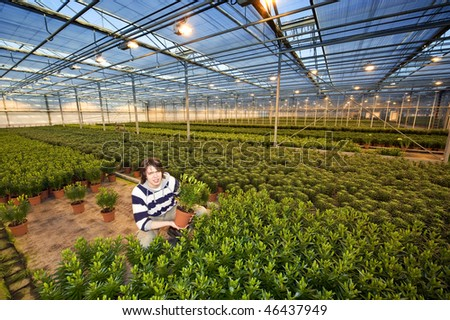 A man, kneeling in the middle of endless rows of potted plants in a greenhouse - stock photo