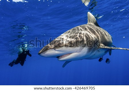 A man photographing an oceanic whitetip shark in the open ocean off Cat Island in the Bahamas. - stock photo