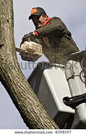 A man removing a dead tree from a bucket lift and chain saw. - stock photo