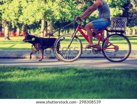 a man riding his bicycle  behind a running dog with a ball thrower in his mouth on a bike path in a city toned with a retro vintage instagram filter effect app or action - stock photo