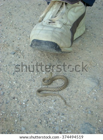 A man's foot about to step on a small brown snake on the desert ground - stock photo