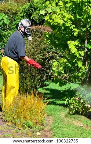 A man sprays plants in the garden. - stock photo