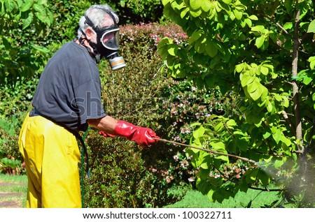 A man sprays plants in the garden. Concept photo of home gardening, business , garden work, ,exterminator, agriculture, danger.  - stock photo
