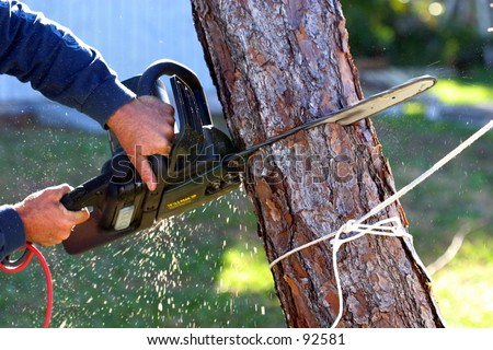 A man uses an electric chainsaw to cut a dead tree down after a hurricane. - stock photo