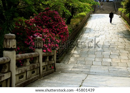 A man walking on a path in a Japanese garden with pink flowers - stock photo
