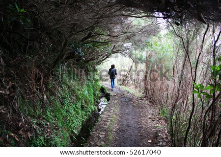 A man walks on a path surrounded by nature