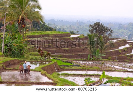 A Man working on a traditional balinese terraced rice field - stock photo