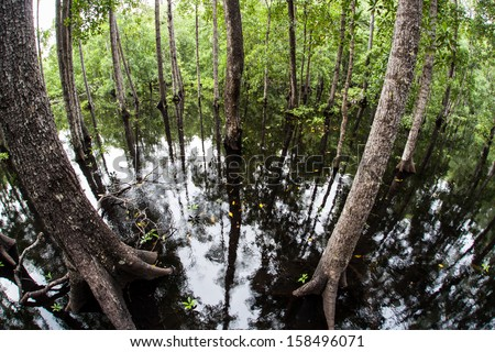 A mangrove forest grows along the edge of a remote island in eastern Indonesia. Mangroves play a vital ecological role in tropical areas all over the world. - stock photo