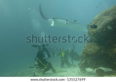 A Manta approaching scuba divers - stock photo