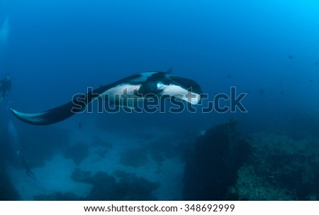 A manta ray with an entourage of cleaner fish swimming past two divers  in clear, deep blue water