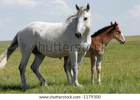 A mare and her young baby in an American West landscape. - stock photo