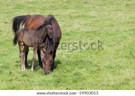 a mare and young foal in a summer meadow - stock photo