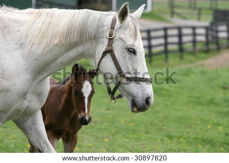 A mare with her newborn foal - stock photo
