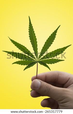 A Marijuana Leaf in a Man's Hand - stock photo