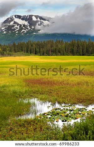 A marsh, meadow, trees and snow-capped mountains in the vibrant colors of late summer on Alaska's Kenai Peninsula - stock photo