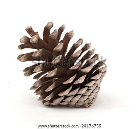 A mature pine cone isolated on white background - stock photo