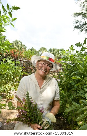 A mature woman picking fresh herbs from her garden, surrounded by tomato plants. - stock photo