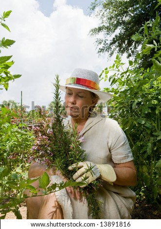 A mature woman seated in her lush summer garden, holding freshly picked herbs, surrounded by tomato plants. - stock photo