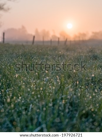 A meadow with moist grass and a fence in the background. The sun is rising. - stock photo