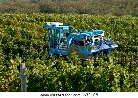 A mechanical grape harvesting machine in a vineyard. Focus = machine. 12MP camera. - stock photo