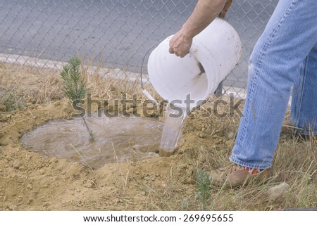 A member of the Clean & Green environmental group of the Los Angeles Conservation Corps waters a tree seedling planted by members of the group  - stock photo