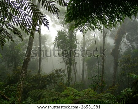 A misty rainforest in the middle of Borneo - stock photo