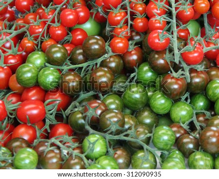 A Mix of Different Coloured Freshly Picked Tomatoes. - stock photo