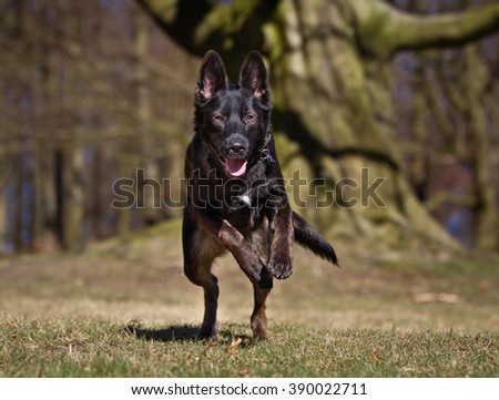 A mixed breed dog without leash outdoors in the nature on a sunny day.