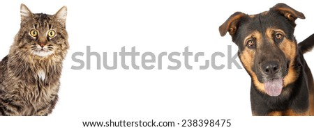 A mixed breed shepherd dog and tabby cat coming out of the sides of an image sized for a social media timeline placeholder - stock photo