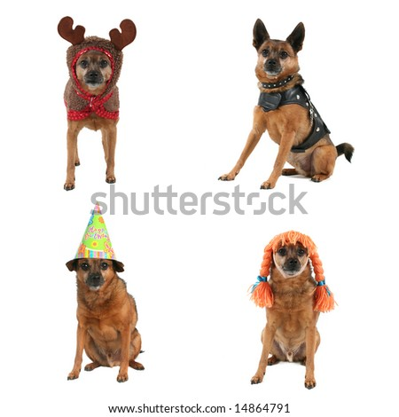 a mixed group of dogs in costumes - stock photo