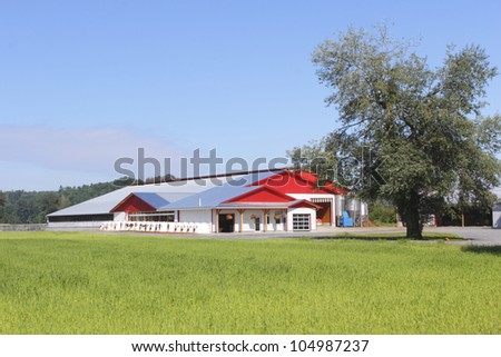 A Modern Building Used For Feeding And Milking Dairy Cows Farm Barn