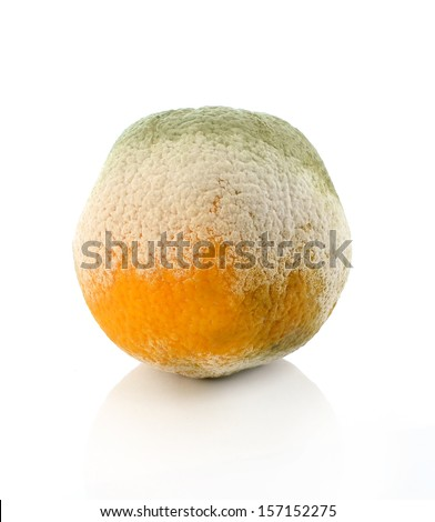 a moldy orange on a white background - stock photo