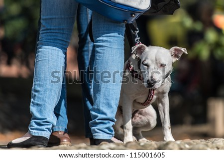 A mongrel dog sits impatiently at its owner's feet as she stands chatting. Ground level shot. Horizontal format with space for copy.