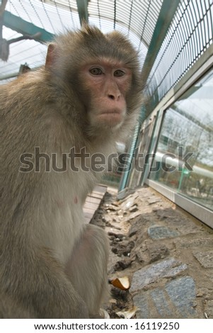 A monkey in a zoo looking sadly - stock photo