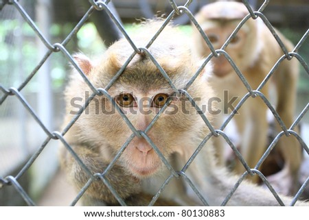 A monkey sits in a zoo behind bars. - stock photo