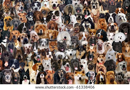 A montage of 120 different dog breeds, looking straightforward.