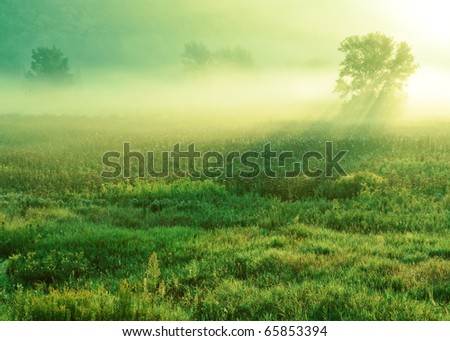 A morning mist hangs low over a very plush and green marsh.