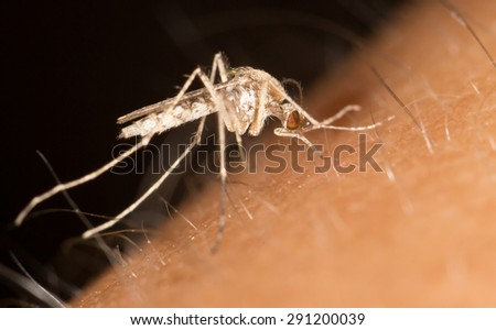 a mosquito on the skin. close - stock photo