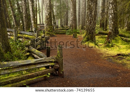 A mossy forest in a northern climate with trees and a walking path along a fence on a cloudy rainy day. - stock photo