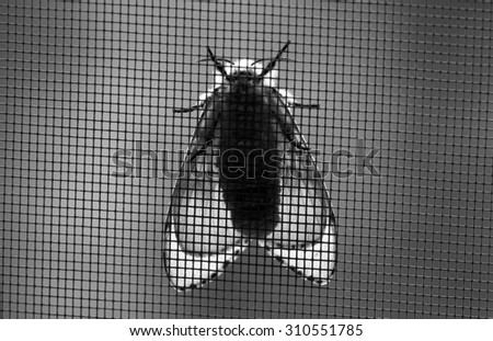A moth in black and white on the background of metal grid - stock photo