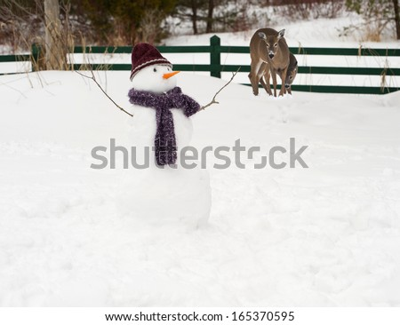 A mother, and baby deer examining a snowman with a delicious looking carrot nose in the winter. - stock photo