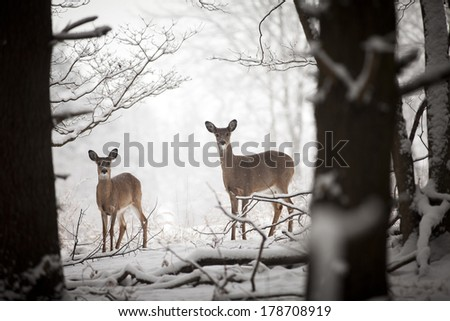 A mother and baby deer standing at the edge of the woods. - stock photo