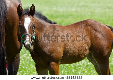 A mother and her foal in a pasture - stock photo