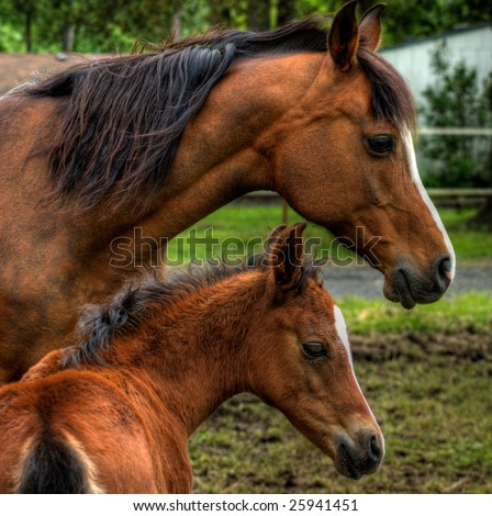Foal Jumping With Mother a Mother Horse And Baby Foal