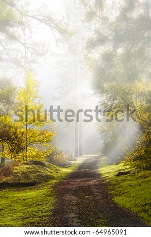 A mountain road in the middle of foggy autumn morning - stock photo